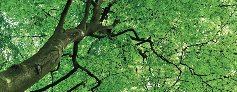 tree leaves material marialma