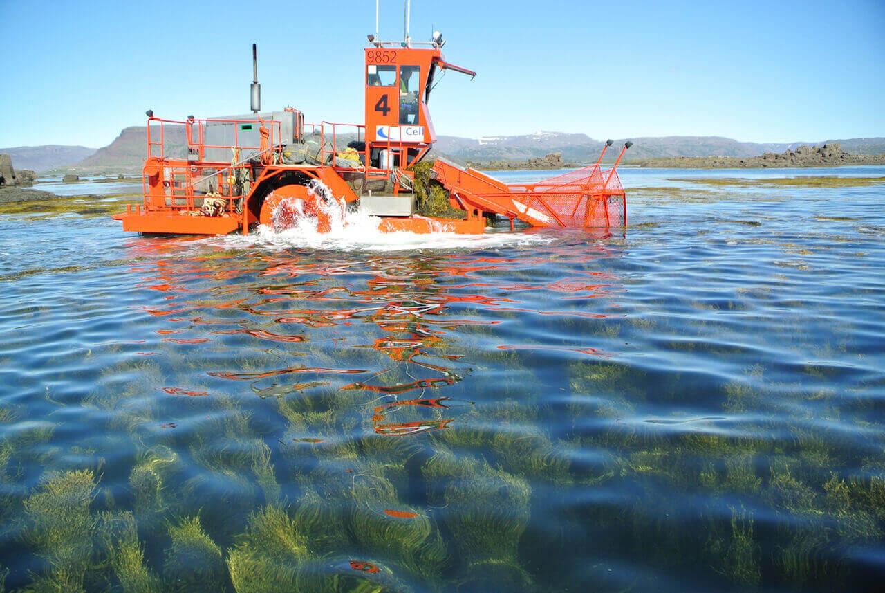Seaweed harvesting seacell