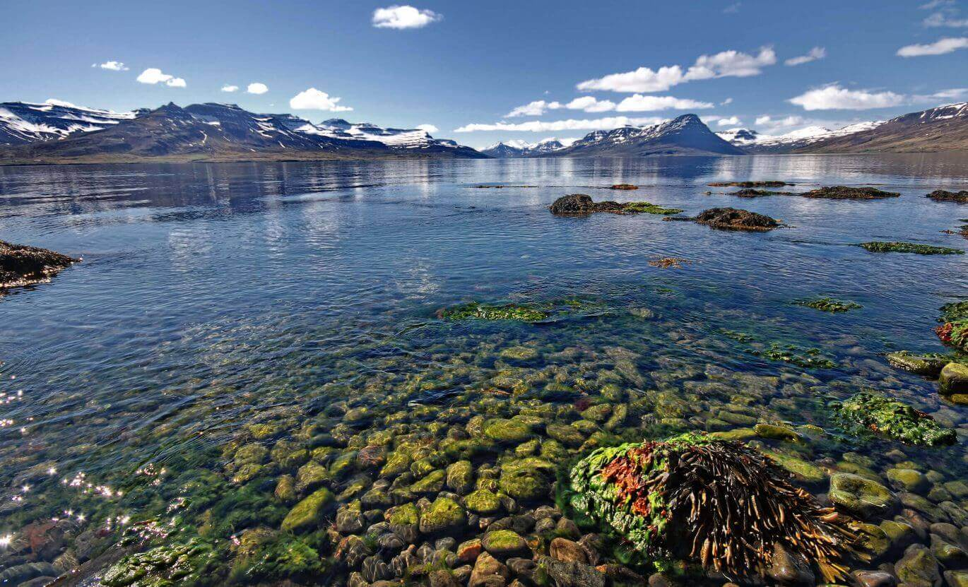 Big glacial lake filled with seaweed.